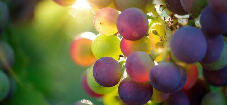 3. ročník Pachtova koštu vín se uskuteční v létě 2021